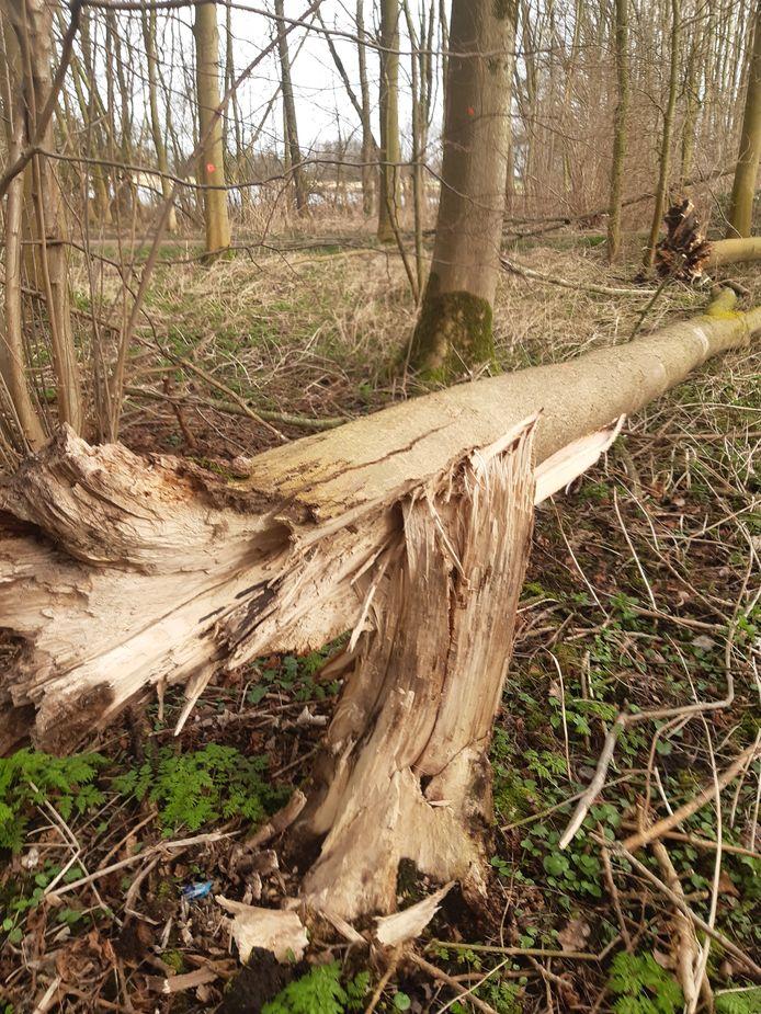 De boswerkzaamheden in het Hoge Bergse Bos gaan van start.