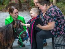 Zieke kinderen mogen knuffelen met paardjes in Isala ziekenhuis
