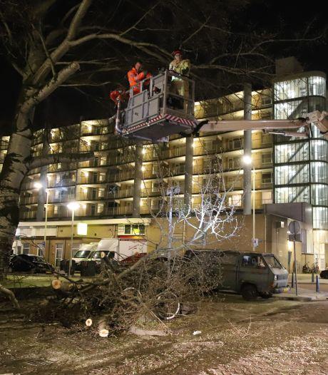 Grote tak breekt deels af en valt op geparkeerde auto's