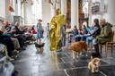 Modeshow met honden op de catwalk in de Grote of Barbara kerk van Culemborg.