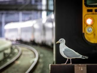 """Ook op zondag blijft overrompeling aan station van Oostende uit, burgemeester Tommelein is """"opgelucht"""""""