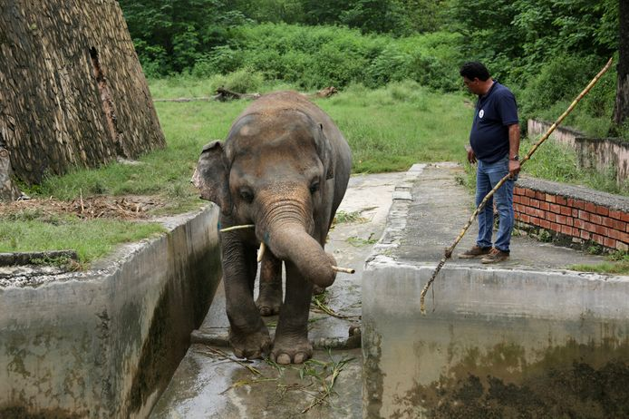 Verzorgers maken het dier klaar voor een reis naar een betere thuis.