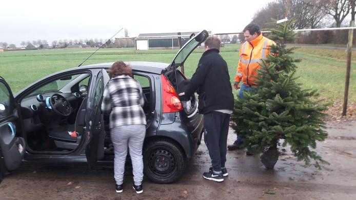 Voor Een Echte Kerstboom Moet Je Een Beetje Lijden Heusden Bd Nl
