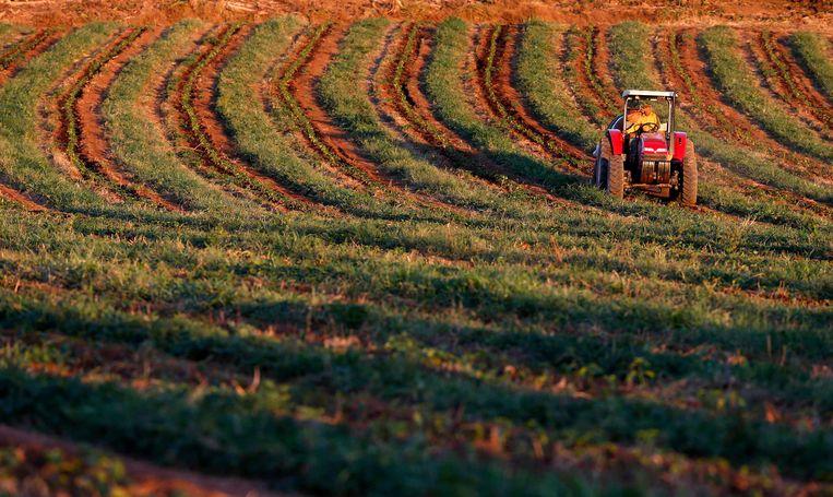 Een koffieplantage in Santo Antonio in Brazilië. De arbeidomstandigheden zijn daar vaak verre van ideaal.  Beeld Reuters, Paulo Whitaker