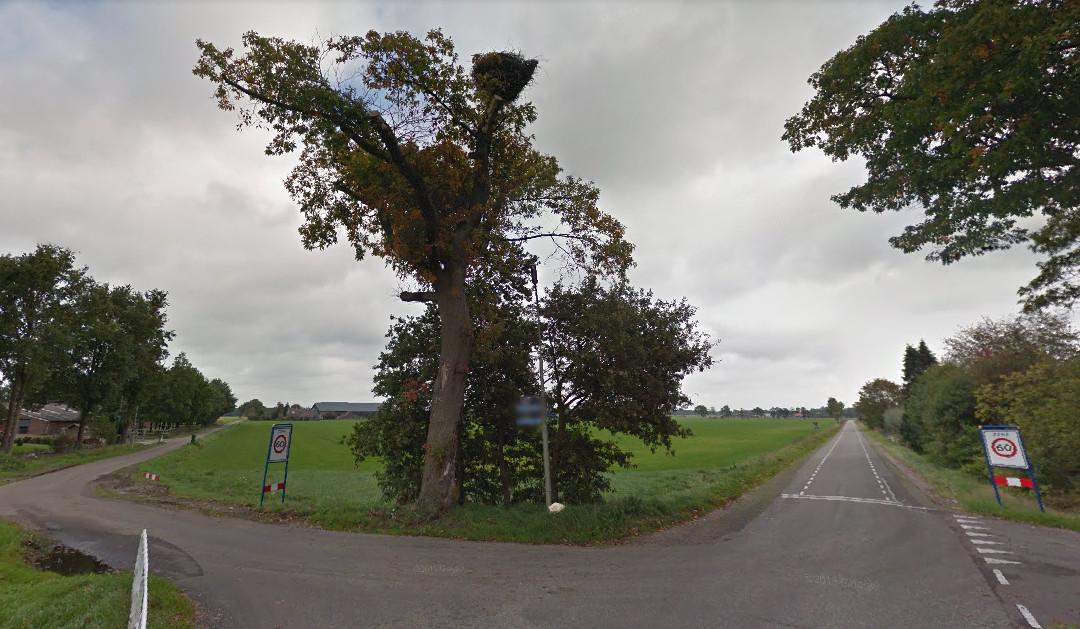 De Amerikaanse eik (met ooievaarsnest) aan de Langedijk die begin 2019 wordt gekapt.