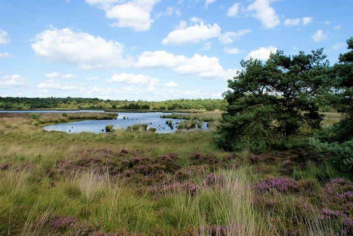 Grenspark Kalmthoutse Heide stelt zich dan toch kandidaat als Nationaal Park aan Vlaamse zijde.