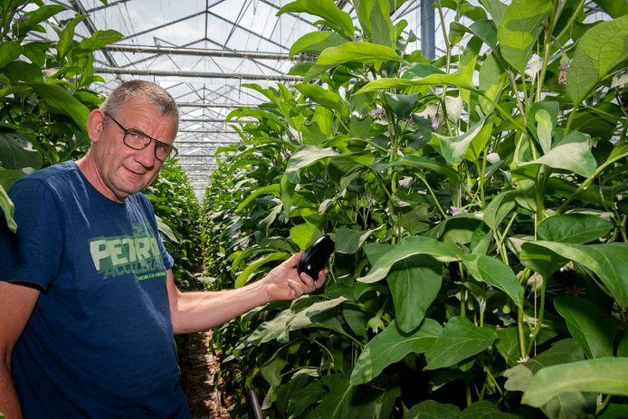 Auberginekweker Peter de Jong zit met zijn kwekerij al tien jaar in Dinteloord.