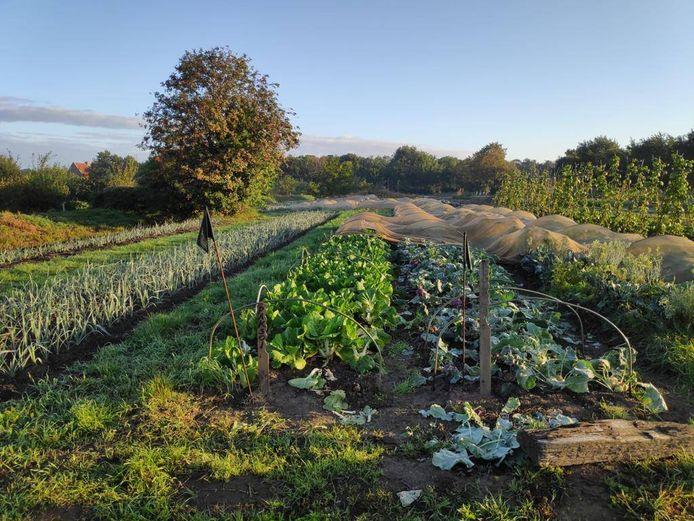 De zelfoogsttuin aan de Stadsboerderij in Turnhout
