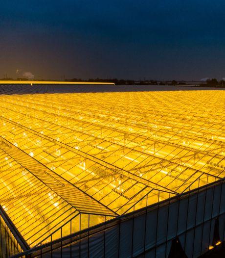 Zaltbommel: 'Lokaal genoeg groene energie opwekken voor glastuinbouw lukt niet'