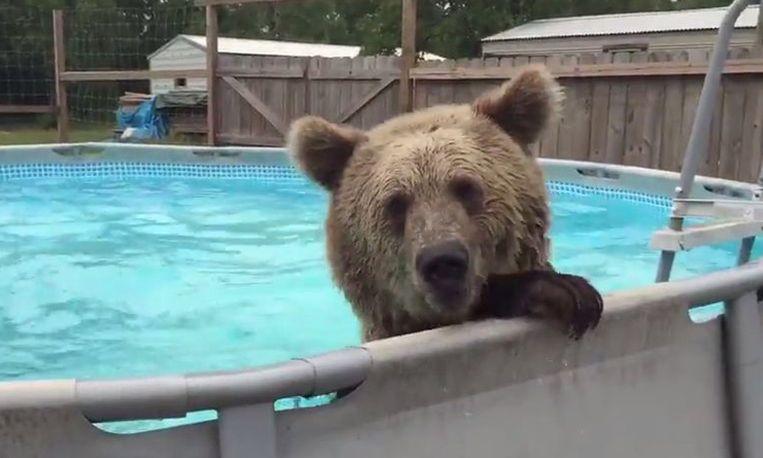 Grizzlybeer zoekt ook verkoeling