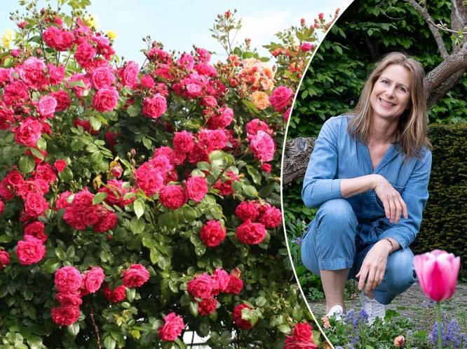 """""""Kleurrijk én verkoelend"""": onze tuinexperte toont hoe je je tuinmuur opfleurt met de mooiste klimplanten"""
