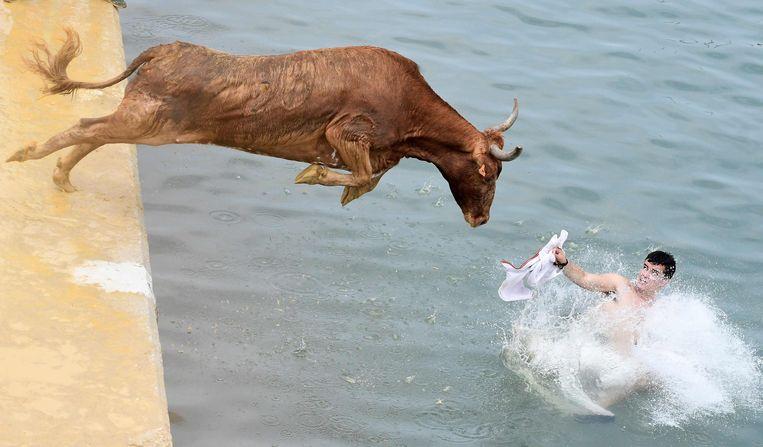 Een stier sprong gisteren de zee bij Dénia in.  Beeld AFP