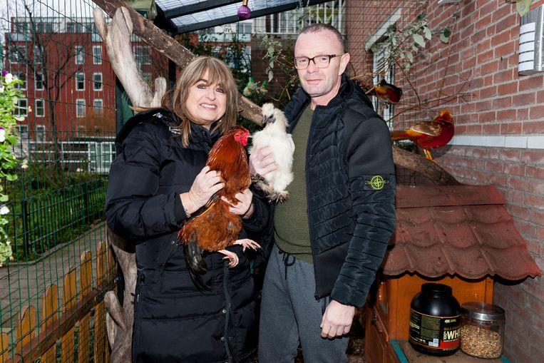 Kippenhouders Marco Feenstra en Gonnie Hoogendijck met kippen Dotte, Adele, Tina Turner, en haan Macho. Beeld Renate Beense