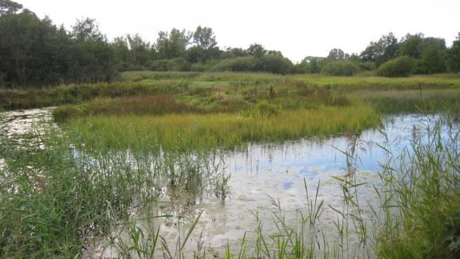 """Stad wil verdroging De Zegge aanpakken: """"Reddingsoperatie van natuurgebied heeft nood aan versnelling"""""""