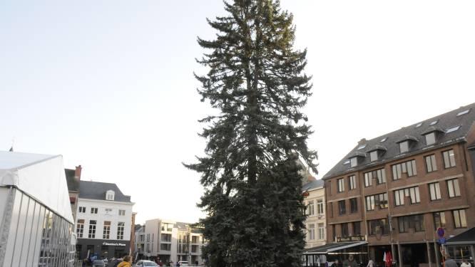 Stad Tienen zoekt kerstboom