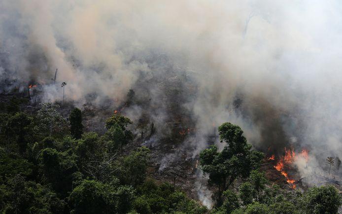 Vuurzee in Amazone jungle.