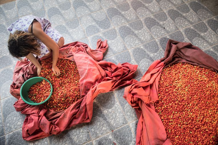 De winst van de peperverkoop wordt gelijk verdeeld. Als iemand financiële hulp nodig heeft, organiseert de gemeenschap een collecte.  Beeld Marlena Waldthausen