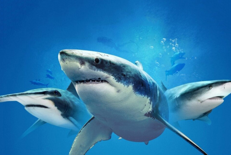 Discovery Shark Week - DOCU - Beeld Discovery