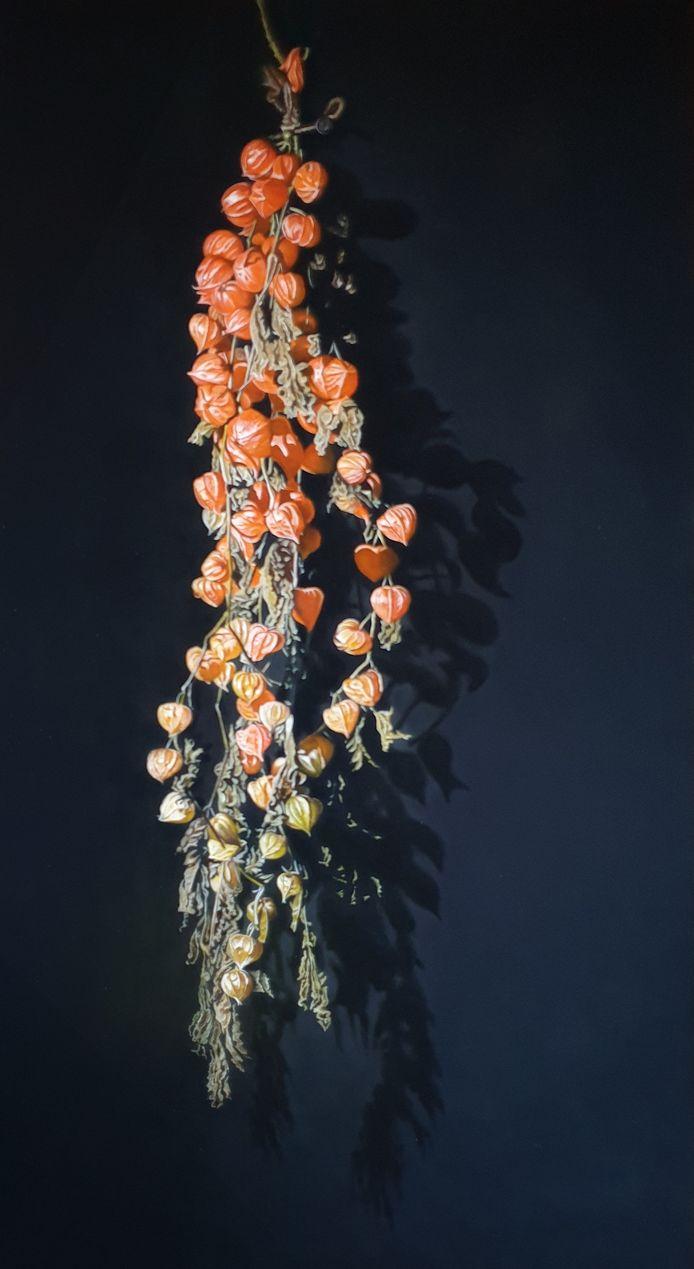 Chinese lantern plant (Jan Teunissen)
