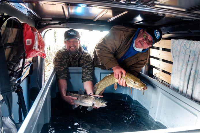 Robby Fish zet met een team vissen over van de opgedroogde vijver rond het Zevenbergenkasteel in Ranst, naar de vijver van het Fort in Wommelgem.