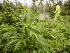 Des cultivateurs de cannabis trahis par l'odeur