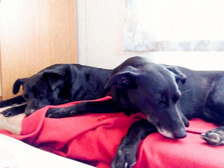 Loes (6) en Lady (5) werden bewust vergiftigd. Ook in de dierenkliniek konden ze niet meer gered worden.