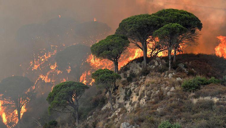 Italië kampt sinds begin deze week met een recordaantal bosbranden. Beeld afp