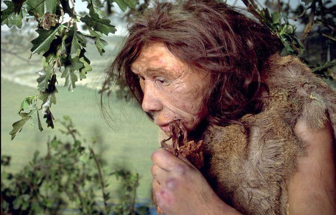 De neanderthaler stierf zo'n 40.000 jaar geleden uit, maar gaf genetisch materiaal door aan de moderne mens.