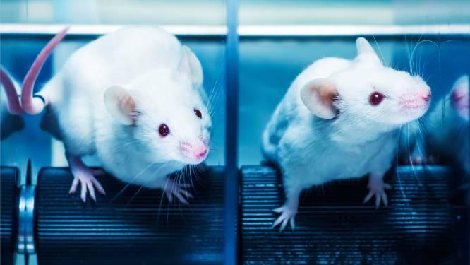 Alzheimersymptomen bij muizen nemen af door behandeling met licht en geluid