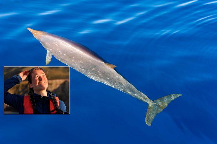 Fleur Visser (inzet) onderzoekt dolfijnen