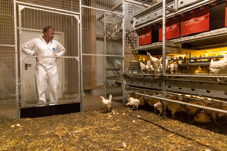 Op de kippenboerderij Biohof Holzbauer in Krumbach. De kippen hebben een groot buitenterrein en een aangename stal. Oostenrijk is wereldkampioen biologische landbouw, met alle voor- en nadelen van dien. Beeld Julius Schrank