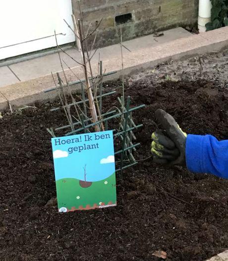 Baarn geeft inwoners flinke korting op bomen: 'Belangrijk om steeds nieuwe, jonge bomen te planten'