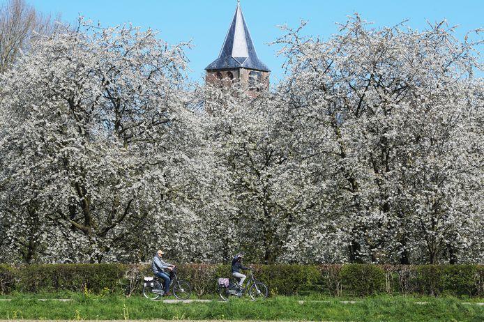 Bloesem in Zoelen