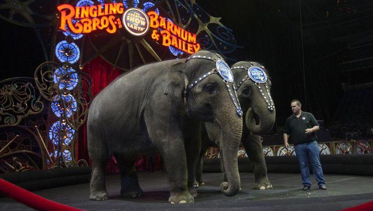De olifanten waren de spil van het Ringling Bros circus Beeld rv