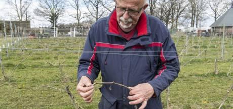 Druiventelers in de Achterhoek bewapenen zich tegen nachtvorst: 'De grote angst van elke wijnboer'