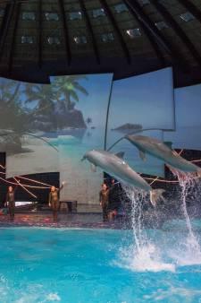 Dierenrechtenorganisatie pleit voor fokverbod dolfijnen: 'Willen einde maken aan Dolfinarium'