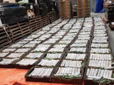 Opsporingsdiensten richten zich komende tijd op fruit als deklading voor cocaïnesmokkel in Brabant