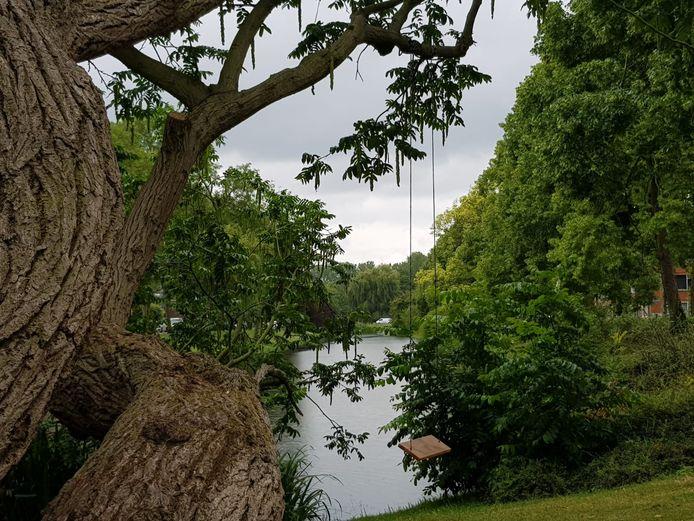 Aan de Boergoensevliet in Oud-Charlois zijn in de coronatijd zes schommels opgehangen. De gemeente Rotterdam haalt ze weer weg: ze zouden te gevaarlijk zijn en de bomen beschadigen.