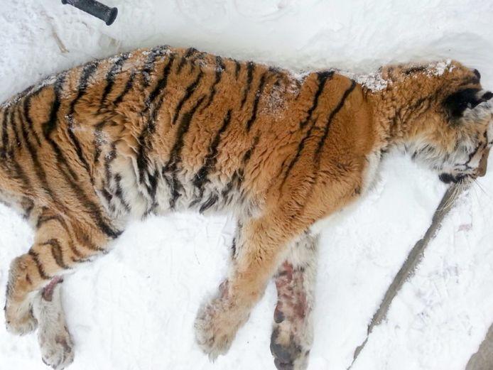 Amur Tiger Center