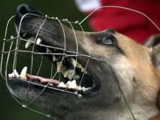 Stad moet veiliger: Arnhem wil agressieve honden gaan muilkorven
