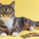 Wow: een kat als huisdier kost je gemiddeld €10.000,-