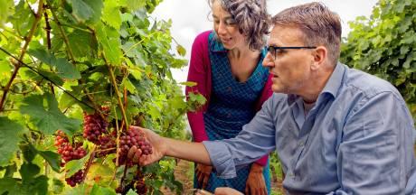 Opvolgers voor wijngaard De Linie in Made: 'Eerste wijnoogst wordt klapper'