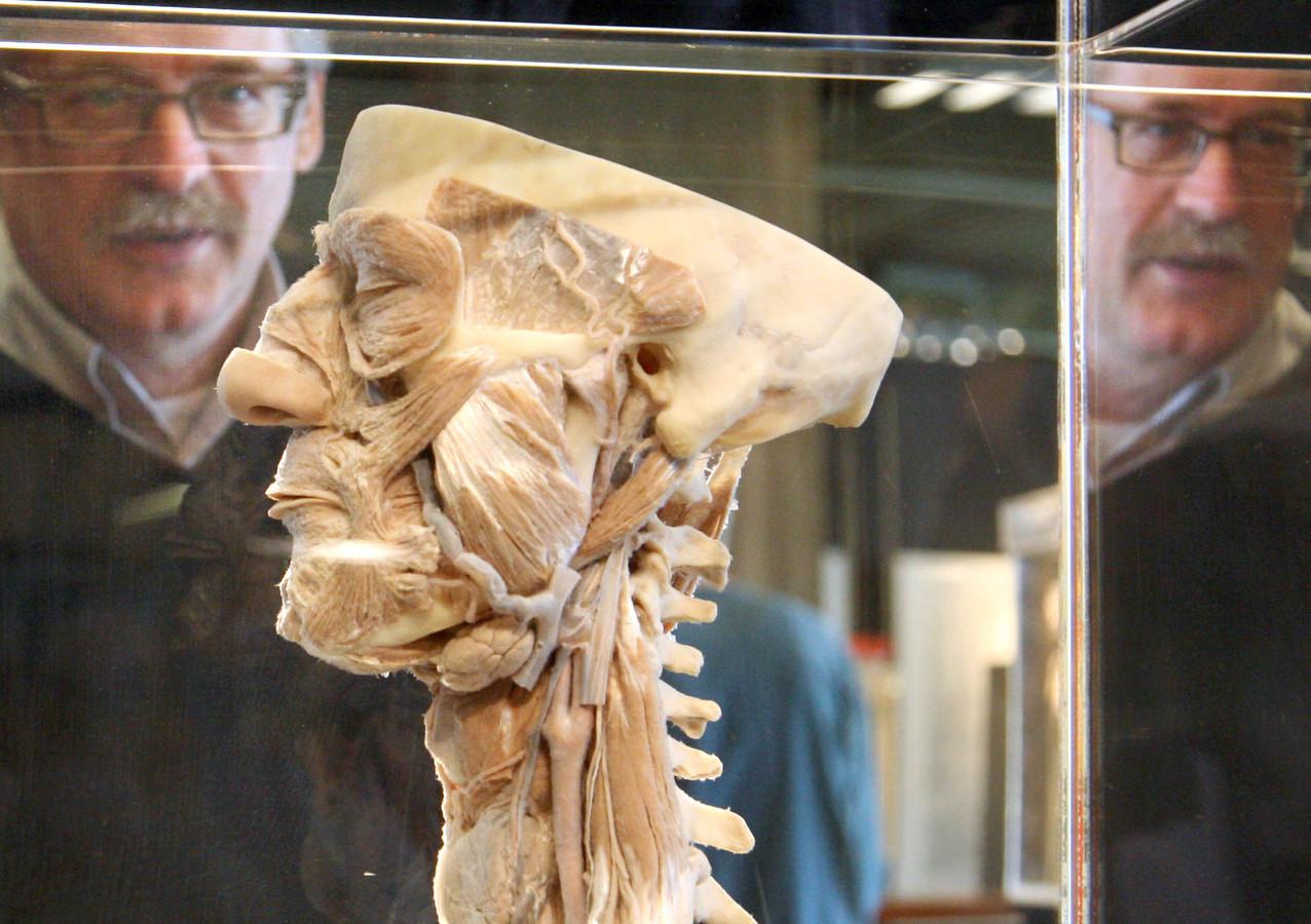 Het Anatomisch Museum, een van de favorieten van de auteurs van het boek '111 plekken in Nijmegen die je gezien moet hebben'.