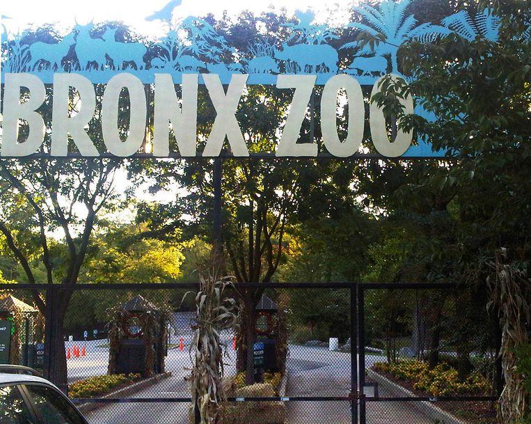 De ingang van de Bronx Zoo, waar de besmette tijger Nadia verblijft. Beeld AP