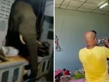 Video van de Dag | Olifant zoekt naar eten en zelfs de keukenmuur moet het hierbij ontgelden