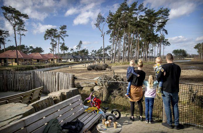 Bezoekers van Safari Resort Beekse Bergen kijken naar de dieren. Het safaripark is vanwege de coronacrisis tijdelijk gesloten, maar huurders van een vakantieverblijf in het park kunnen tijdens hun vakantie toch van de dieren genieten.