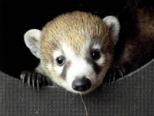 Bezoekers voorlopig weer welkom in Tierpark Nordhorn en Bürg Bentheim