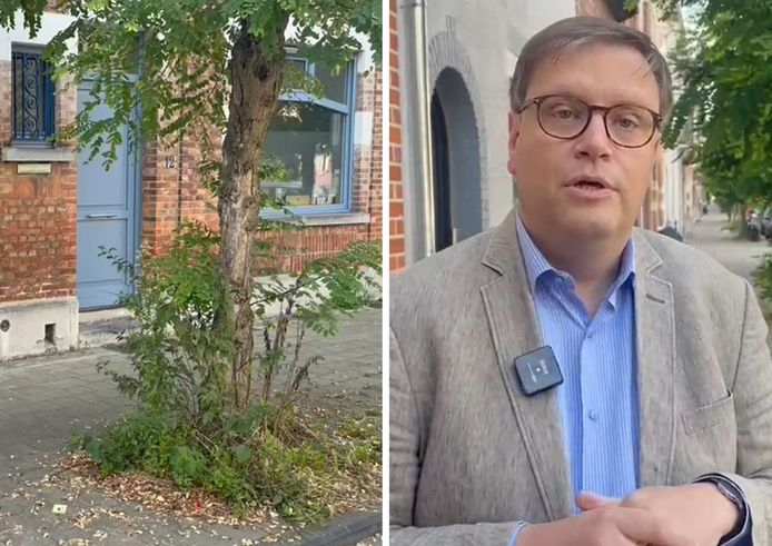 Links: de plant is inmiddels weggehaald. Rechts: voormalig burgemeester van Anderlecht Gaëtan Van Goidsenhoven.