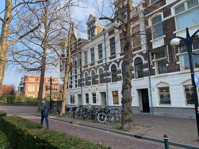 Deze lindes aan het Vrieseplein in Dordrecht worden, als het aan de Bomenridders ligt, niet gekapt.