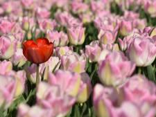 Akkerbouwer wil landbouwgrond opofferen voor bloemenrand in Dronten, maar heeft wel hulp nodig